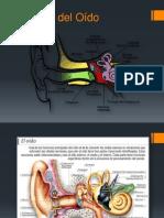 4 Anatomía del Oído