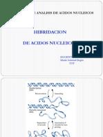 CLASE 3 - HIBRIDACION