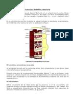 Bioquimica de Contraccion Muscular 2006