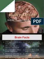 brainplasticityfinal-120413142352-phpapp01