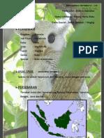 20. Burung Hantu Bubo