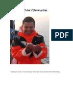 School of Cornish Sardines