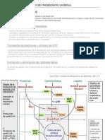 Fase Comu BQ 2012 PDH Krebs