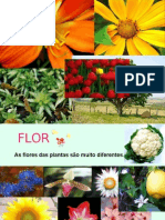Flor Plantas Semflor Fatores Do Meio