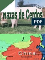 Presentacion razas cerdos