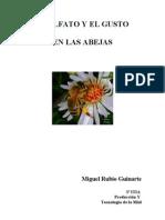 Olfato y Gusto - Miguel Rubio