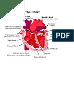 Cardiovascular System (Anatomy)