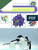 Metabolismul proteinelor_1