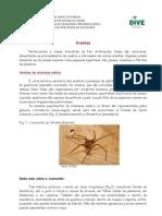 Aranhas Para a Populacao