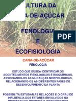 Cana - Fenologia e Ecofisiologia