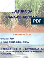 CANA -   INTRODUÇÃOO MERCADO
