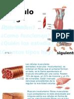 Anatomia-musxulos Del Cuerpo HumNO