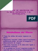 Mecanismos de Absorcion Del Fe (Hierro) en El Enterocito y El Eritroblasto.