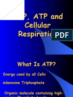 ADP,ATP and Cellular Respiration