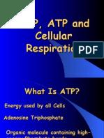 ADP,ATP and Cellular Respiration