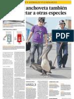 Falta de anchoveta afecta a aves marinas