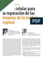Lesion Medular y Celular Madre