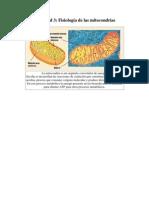 Fisiologia de La Mitocondrias