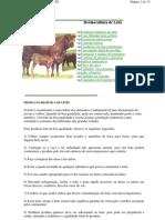 bovinocultura de leite