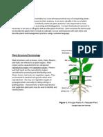 Plant Anatomy Week 1