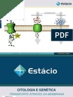 4 Bio Transporte Membrana