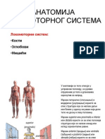 Anatomija lokomotornog sistema