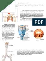 Anatomia Fisiologia Do Sistema Respiratorio