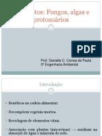 Fungos, algas e protozoários (1)