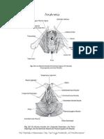Ginnastica perineale