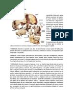 Huesos Del Craneo y Cara