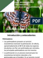 Mariposas Expo Power