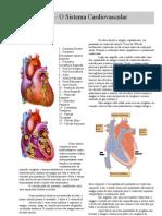 Anatomia - Apostila - Sistema Cardiovascular