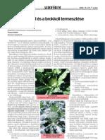brokkolitermesztés