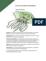 CARÁCTERÍSTICAS DE LOS ANIMALES  INVERTEBRADOS