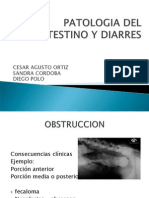 Patologia Del Intestino y Diarres