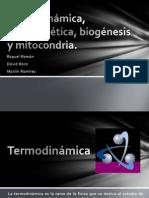 Termodinámica, bioenergética, biogénesis y mitocondria