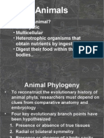 Diversity Animalia