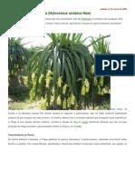 Pitaya colombiana