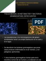 Pseudomonas Acinobacter y Bacterias Gramnegativas Infrecuentes