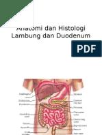 Anatomi Dan Histologi Lambung Dan Duodenum