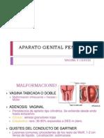 Aparato Genital Femenino (1)