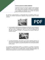 Impactos en La Salud y El Medio Ambiente