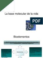 clase bioelemento biomolecula