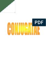 Conjugatae