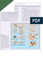 originofeukaryoticcells