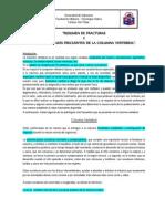 Fracturas y Patologias de Columna