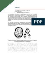 El Cerebro y La Mente.