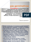 Capas Germinativas Expo.