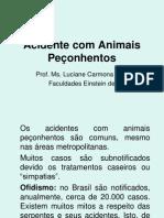 26 09 2009 07-08-09acidente Com Animal Peconhento