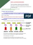 03 La Synthese Des Proteines